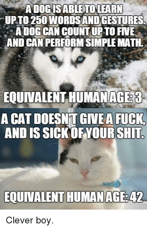 Cleverity: ADOGISABLETOLEARN  UPTO 250 WORDSANDGESTURES  A DOG CAN COUNT UP TO FIVE  AND CAN PERFORM SIMPLE MATH.  EQUINALENT HUNANAG33  A CAT DOESNT GIVEA FUCK  AND IS SICK OF YOUR SHIT  EQUIVALENT HUMANAGE:42 Clever boy.