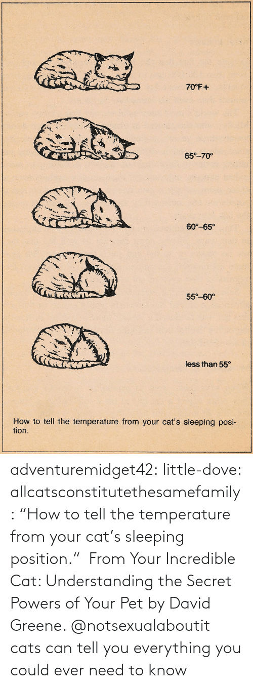 "Amazon, Cats, and Dove: adventuremidget42:  little-dove:  allcatsconstitutethesamefamily: ""How to tell the temperature from your cat's sleeping position.""  From Your Incredible Cat: Understanding the Secret Powers of Your Pet by David Greene.    @notsexualaboutit   cats can tell you everything you could ever need to know"