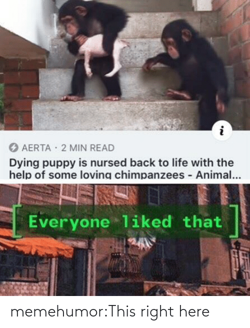 Animal: AERTA · 2 MIN READ  Dying puppy is nursed back to life with the  help of some loving chimpanzees Animal...  Everyone liked that memehumor:This right here