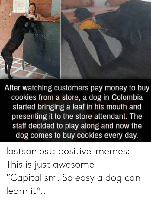 "Learn It: After watching customers pay money to buy  cookies from a store, a dog in Colombia  started bringing a leaf in his mouth and  presenting it to the store attendant. The  staff decided to play along and now the  dog comes to buy cookies every day. lastsonlost:  positive-memes:  This is just awesome  ""Capitalism. So easy a dog can learn it"".."