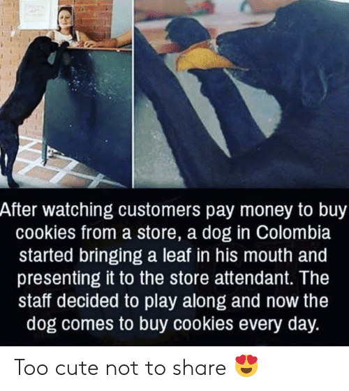 Cookies, Cute, and Money: After watching customers pay money to buy  cookies from a store, a dog in Colombia  started bringing a leaf in his mouth and  presenting it to the store attendant. The  staff decided to play along and now the  dog comes to buy cookies every day. Too cute not to share 😍