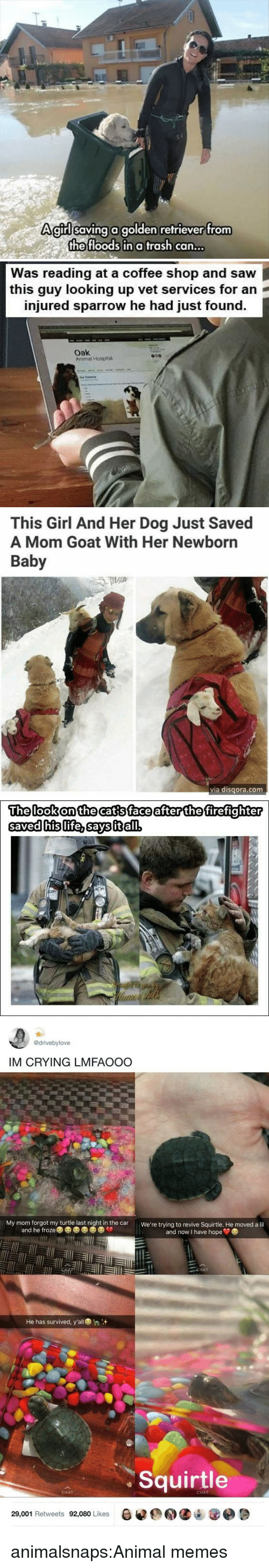 Crying, Memes, and Saw: Agirllsaving a golden refriever trom  the floods in a trash can...   Was reading at a coffee shop and saw  this guy looking up vet services for an  injured sparrow he had just found.  oak  Arimal Hospna   This Girl And Her Dog Just Saved  A Mom Goat With Her Newborn  Baby  via disqora.com   The lookonthecatsface after the firefighter  savedhislife.savsitłal   @drivebylove  IM CRYING LMFAOOO  My mom forgot my turtle last night in the car  We're trying to revive Squirtle. He moved a lil  and he froze  and now I have hope  CHAT  He has survived, y'all  Squirtle  CHAT  CHAT  29,001 Retweets 92,080 Likes  0遽@用缱내 @e週 animalsnaps:Animal memes