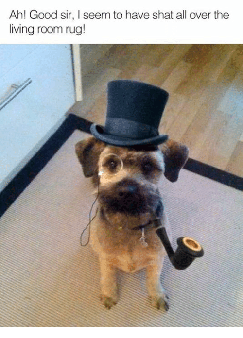 Seemes: Ah! Good sir, I seem to have shat all over the  living room rug!