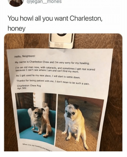 Dank, Hello, and Old Man: ajegan mones  You howl all you want Charleston,  honey  Hello, Neighbors!  My name is Charleston Chew and I'm very sorry for my howling.  an old man now, with cataracts, and sometimes I get real scared  I'm  use 1 can't see where I am and cant find my mom.  beca  As I get used to my new place, I will start to settle down.  Thanks for being patient with me. I don't mean to be such a pain  Charleston Chew Pug  Apt 502  When I'm not howling  nd being h