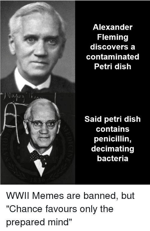 """Memes, Dish, and History: Alexander  Fleming  discovers a  contaminated  Petri dish  Said petri dish  contains  penicillin,  decimating  bacteria WWII Memes are banned, but """"Chance favours only the prepared mind"""""""