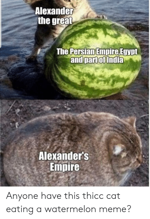 Watermelon Meme: Alexander  the great  The Persian Empire Egypt  and partof India  Alexander's  Empire Anyone have this thicc cat eating a watermelon meme?
