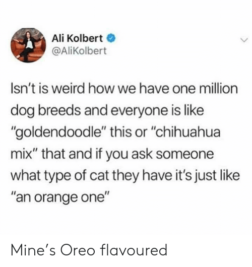 "Ali, Chihuahua, and Weird: Ali Kolbert  @AliKolbert  Isn't is weird how we have one million  dog breeds and everyone is like  ""goldendoodle"" this or ""chihuahua  mix"" that and if you ask someone  what type of cat they have it's just like  ""an orange one"" Mine's Oreo flavoured"