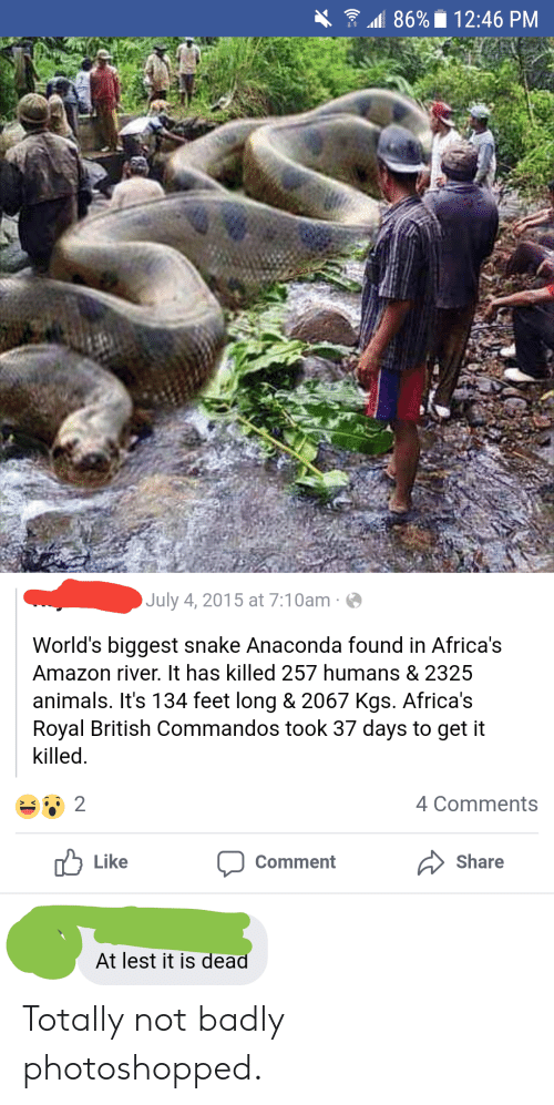 commandos: All 86%. 12:46 PM  July 4, 2015 at 7:10am  World's biggest snake Anaconda found in Africa's  Amazon river. It has killed 257 humans & 2325  animals. It's 134 feet long & 2067 Kgs. Africa's  Royal British Commandos took 37 days to get it  killed.  4 Comments  Like  Comment  Share  At lest it is dead Totally not badly photoshopped.