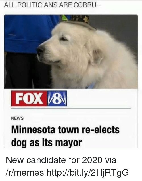 Memes, News, and Http: ALL POLITICIANS ARE CORRU-  FOX 8  NEWS  Minnesota town re-elects  dog as its mayor New candidate for 2020 via /r/memes http://bit.ly/2HjRTgG