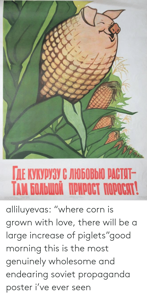 "Will Be: alliluyevas:  ""where corn is grown with love, there will be a large increase of piglets""good morning this is the most genuinely wholesome and endearing soviet propaganda poster i've ever seen"