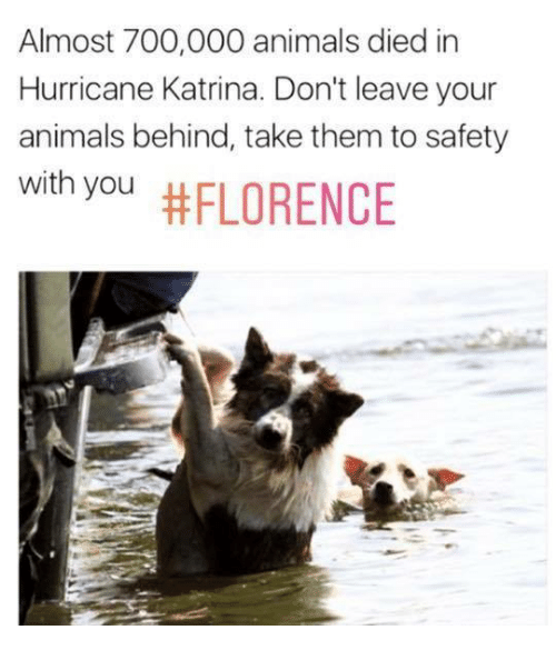 katrina: Almost 700,000 animals died in  Hurricane Katrina. Don't leave your  animals behind, take them to safety  with you
