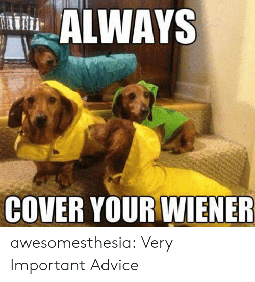 Advice, Tumblr, and Blog: ALWAYS  COVER YOUR WIENER awesomesthesia:  Very Important Advice