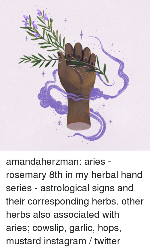 hops: amandaherzman:  aries - rosemary 8th in my herbal hand series - astrological signs and their corresponding herbs. other herbs also associated with aries; cowslip, garlic, hops, mustard instagram / twitter