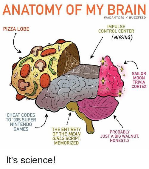 Girls, Memes, and Nintendo: ANATOMY OF MY BRAIN  @ADAMTOTS BUZZFEED  PIZZA LOBE  IMPULSE  CONTROL CENTER  (MISSING  4 SAILOR  MOON  TRIVIA  CORTEX  CHEAT CODES  TO '90S SUPER  NINTENDO  GAMES  THE ENTIRETY  OF THE MEAN  GIRLS SCRIPT,  MEMORIZED  PROBABLY  JUST A BIG WALNUT  HONESTLY It's science!