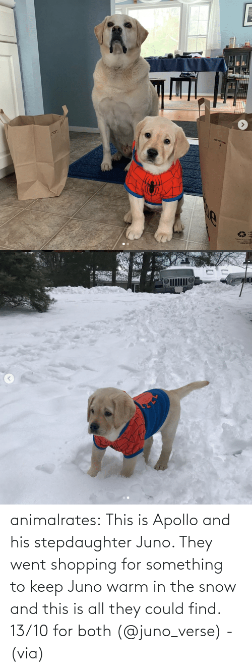 Both: animalrates:  This is Apollo and his stepdaughter Juno. They went shopping for something to keep Juno warm in the snow and this is all they could find. 13/10 for both‬ (@juno_verse) - (via)