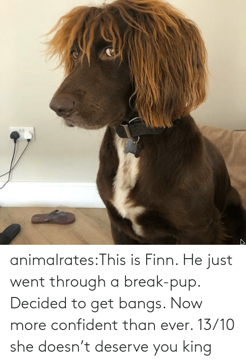 Target: animalrates:This is Finn. He just went through a break-pup. Decided to get bangs. Now more confident than ever. 13/10 she doesn't deserve you king