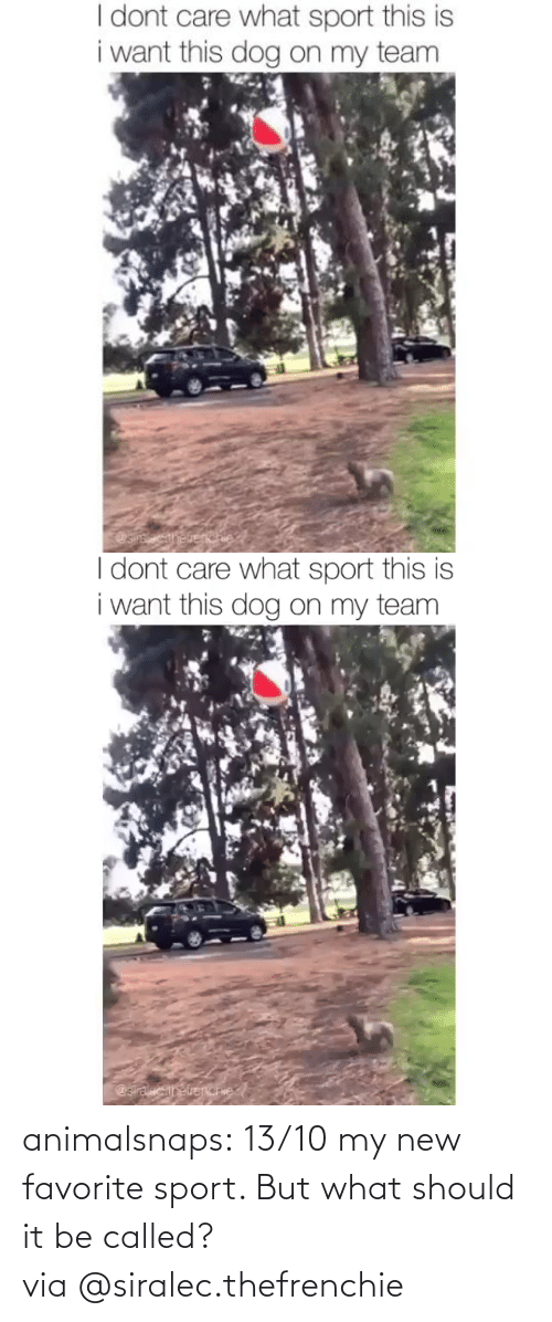Should: animalsnaps:  13/10 my new favorite sport. But what should it be called?via@siralec.thefrenchie