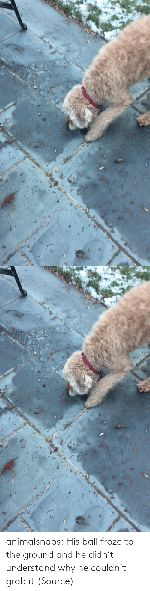 Didnt: animalsnaps:  His ball froze to the ground and he didn't understand why he couldn't grab it (Source)