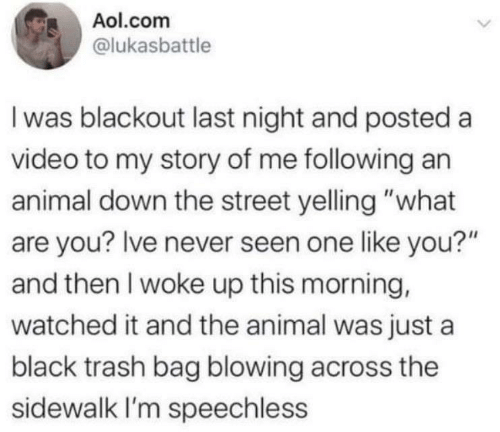 """are you: Aol.com  @lukasbattle  I was blackout last night and posted a  video to my story of me following an  animal down the street yelling """"what  are you? Ive never seen one like you?""""  and then I woke up this morning,  watched it and the animal was just a  black trash bag blowing across the  sidewalk I'm speechless"""