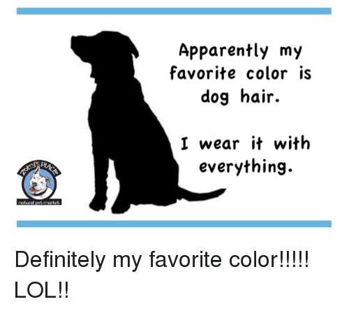 Apparently, Definitely, and Lol: Apparently my  favorite color is  dog hair.  I wear it with  everything. Definitely my favorite color!!!!! LOL!!