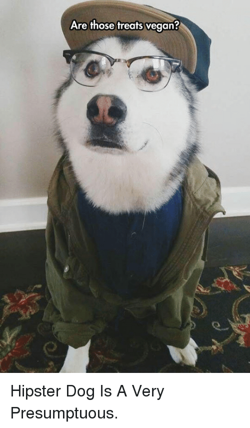 presumptuous: Are those treats vegan? <p>Hipster Dog Is A Very Presumptuous.</p>