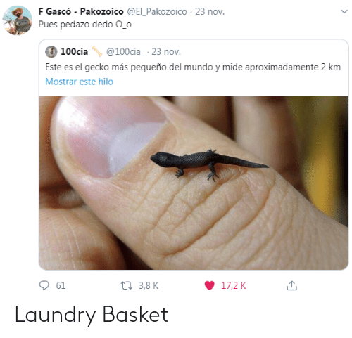 i dont even: Are you a  laundry basket?  Are you a  laundry basket?  No, I'm  a chair  Are you a  laundry basket?  Man, I don't even  know anymore  I'm the  floor.  LOLNEIN.com Laundry Basket