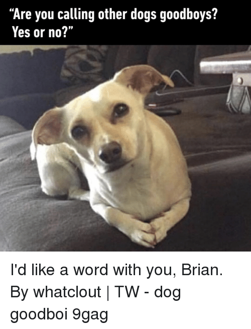 """9gag, Dogs, and Memes: """"Are you calling other dogs goodboys?  Yes or no?'"""" I'd like a word with you, Brian.⠀ By whatclout 