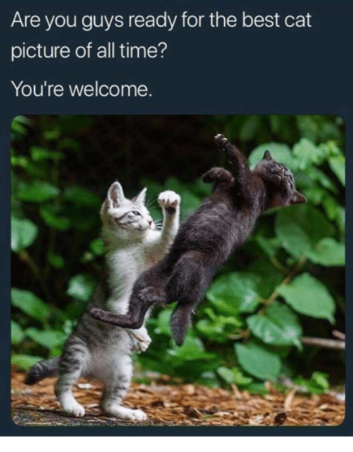 Memes, Best, and Time: Are you guys ready for the best cat  picture of all time?  You're welcome