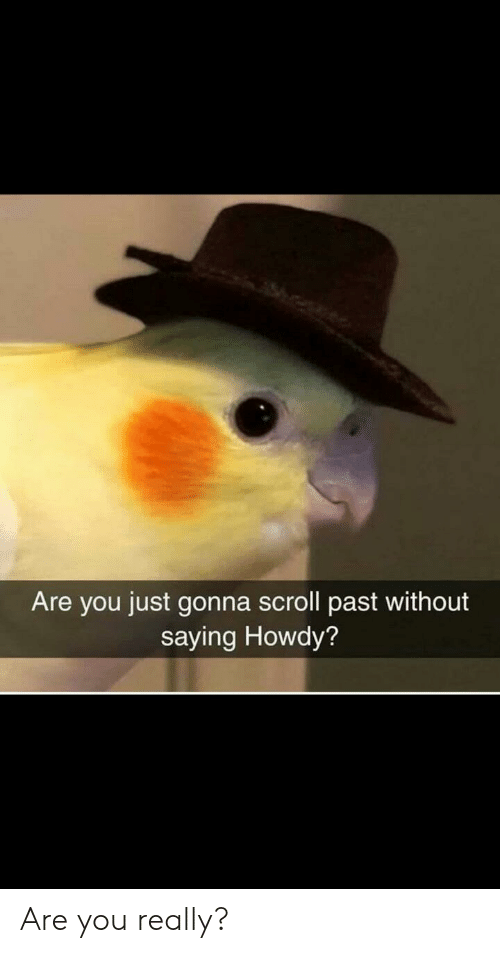 Are You Just Gonna Scroll Past Without Saying Howdy? Are You Really