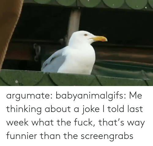 Thinking About: argumate: babyanimalgifs: Me thinking about a joke I told last week what the fuck, that's way funnier than the screengrabs