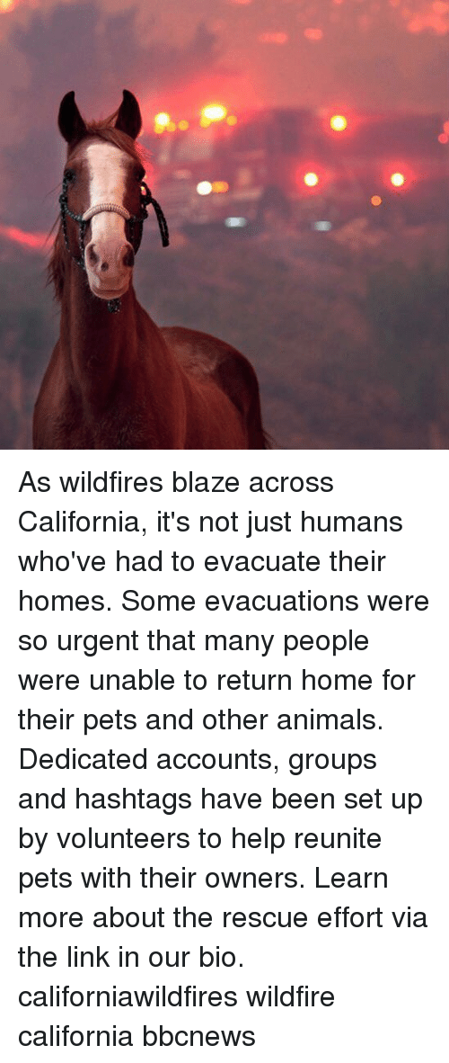 Animals, Memes, and Blaze: As wildfires blaze across California, it's not just humans who've had to evacuate their homes. Some evacuations were so urgent that many people were unable to return home for their pets and other animals. Dedicated accounts, groups and hashtags have been set up by volunteers to help reunite pets with their owners. Learn more about the rescue effort via the link in our bio. californiawildfires wildfire california bbcnews