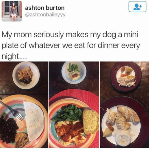 Ironic, Mom, and Dog: ashton burton  @ashtonbaileyyy  My mom seriously makes my dog a mini  plate of whatever we eat for dinner every  night...