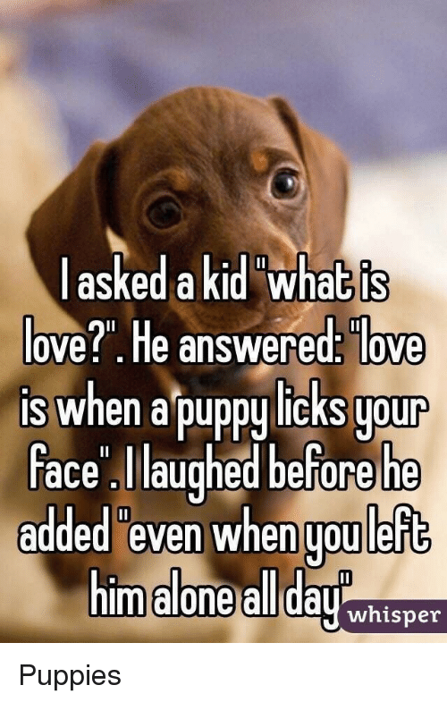 """Being Alone, Love, and Puppies: askedakid what is  ove?"""". He answered: love  is when a puppy licks uour  ace laughed before he  added even when uou left  m alone all dayhisner Puppies"""