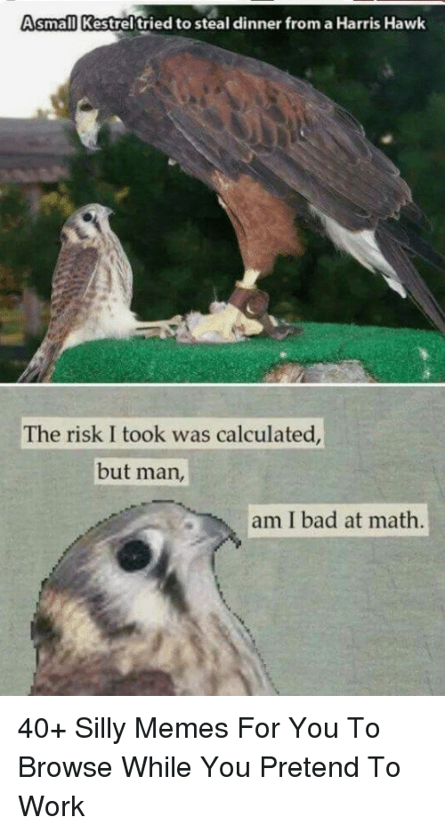 Risk I Took Was Calculated But Man Am I Bad At Math: Asmall Kestrel tried to steal dinner from a Harris Hawk  The risk I took was calculated  but man,  am I bad at math. 40+ Silly Memes For You To Browse While You Pretend To Work