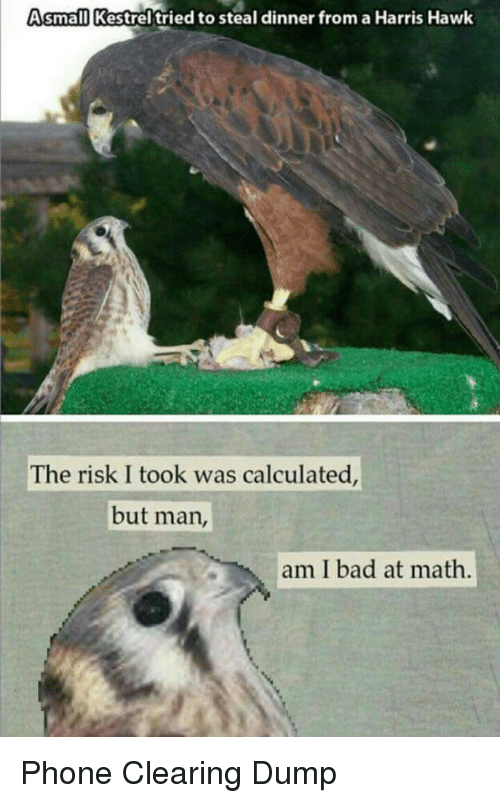 Bad, Phone, and Math: Asmall Kestrel'tried to steal dinner from a Harris Hawk  The risk I took was calculated  but man,  am I bad at math Phone Clearing Dump