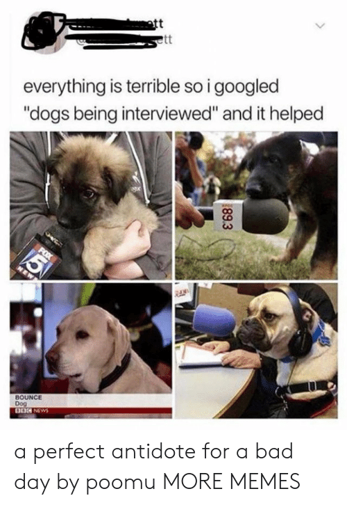 """Bad day: att  everything is terrible so i googled  """"dogs being interviewed"""" and it helped  BOUNCE  Dog  89.3 a perfect antidote for a bad day by poomu MORE MEMES"""