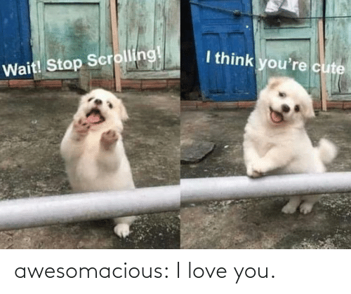 I Love You: awesomacious:  I love you.