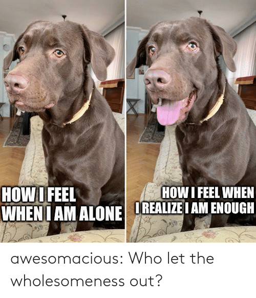 Let: awesomacious:  Who let the wholesomeness out?
