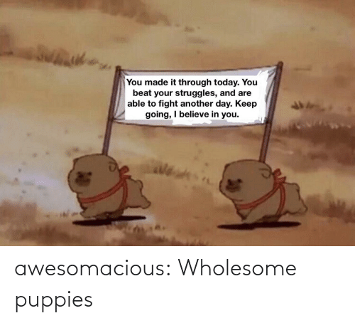 Wholesome: awesomacious:  Wholesome puppies