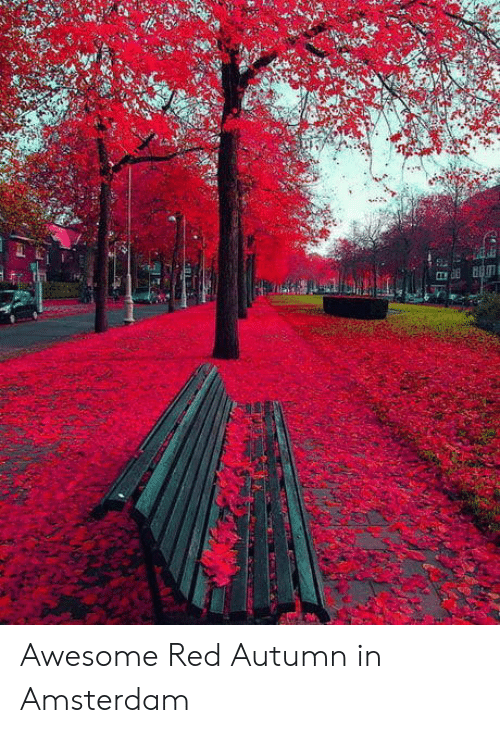 Amsterdam, Awesome, and Red: Awesome Red Autumn in Amsterdam
