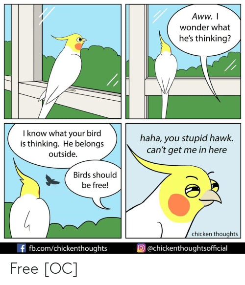 Aww, Birds, and Chicken: Aww. I  wonder what  he's thinking?  I know what your bird  is thinking. He belongs  haha, you stupid hawk.  can't get me in here  outside.  Birds should  be free!  chicken thoughts  f fb.com/chickenthoughts  O@chickenthoughtsofficial Free [OC]