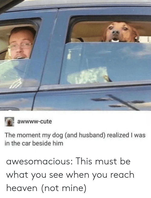 Cute, Heaven, and Tumblr: awwww.cute  The moment my dog (and husband) realized I was  in the car beside him awesomacious:  This must be what you see when you reach heaven (not mine)