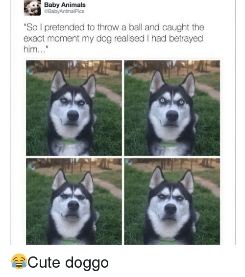 "Animals, Memes, and Baby: Baby Animals  BabyAnimalPics  ""So I pretended to throw a ball and caught the  exact moment my dog realised I had betrayed  him.. 😂Cute doggo"
