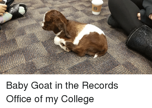 College, Goat, and Office