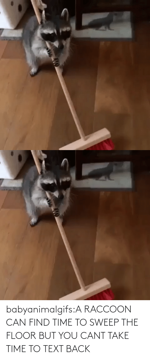 Back: babyanimalgifs:A RACCOON CAN FIND TIME TO SWEEP THE FLOOR BUT YOU CANT TAKE TIME TO TEXT BACK