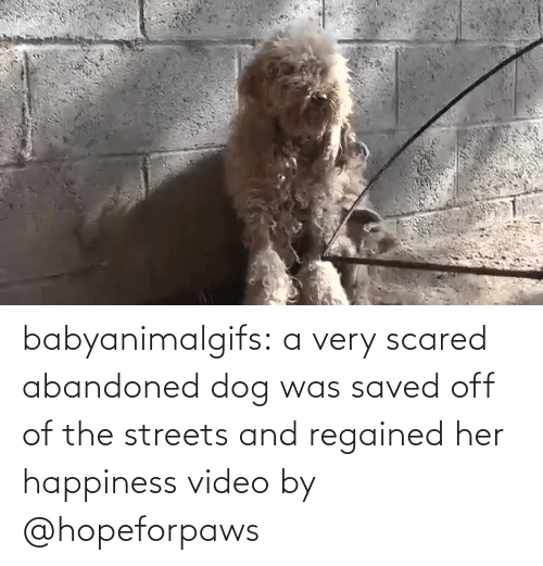 youtube.com: babyanimalgifs: a very scared abandoned dog was saved off of the streets and regained her happiness video by @hopeforpaws
