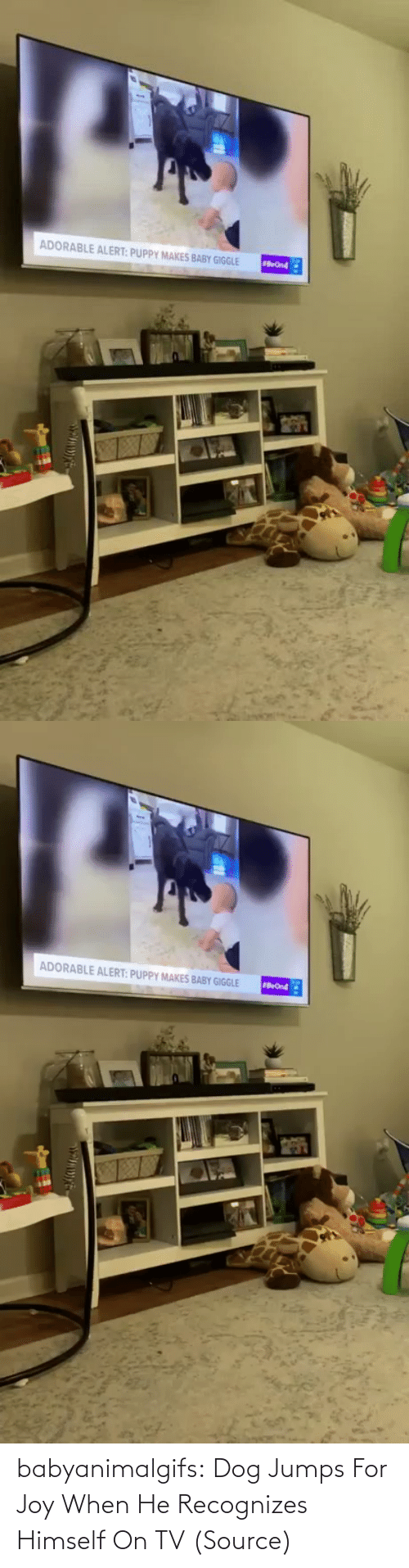 When: babyanimalgifs:  Dog Jumps For Joy When He Recognizes Himself On TV (Source)