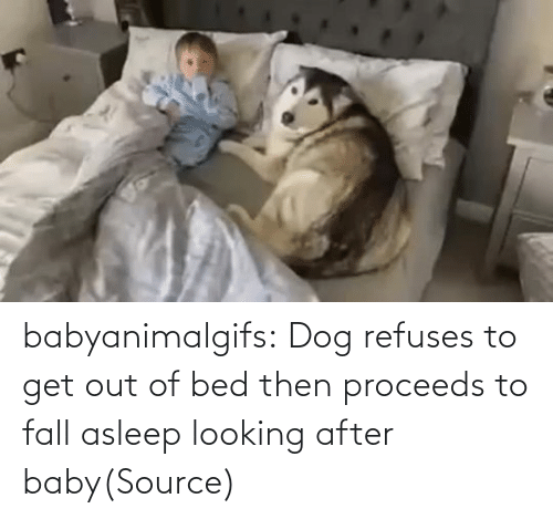 bed: babyanimalgifs:  Dog refuses to get out of bed then proceeds to fall asleep looking after baby(Source)