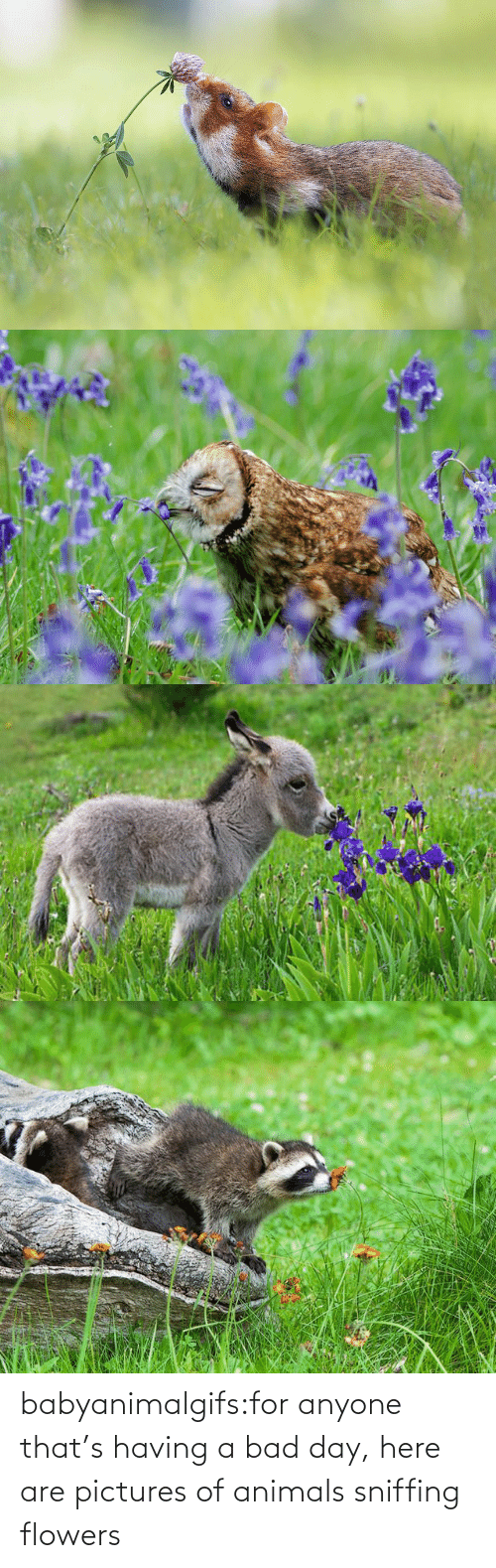Bad day: babyanimalgifs:for anyone that's having a bad day, here are pictures of animals sniffing flowers