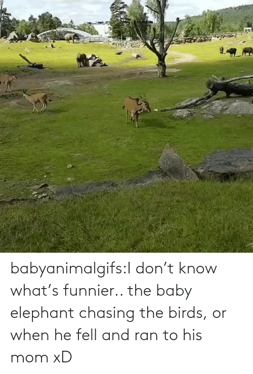 Dont Know: babyanimalgifs:I don't know what's funnier.. the baby elephant chasing the birds, or when he fell and ran to his mom xD